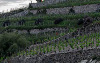 Vignes et Chapelle